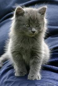 bajka dla dzieci o kotku