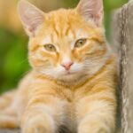bajka o kotkach