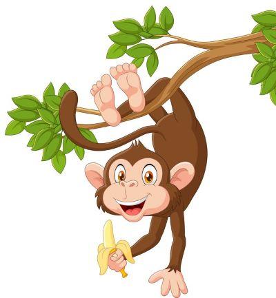 małpka banan