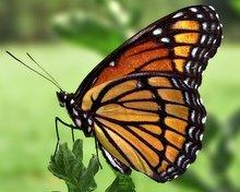 bajka dla dzieci motylek